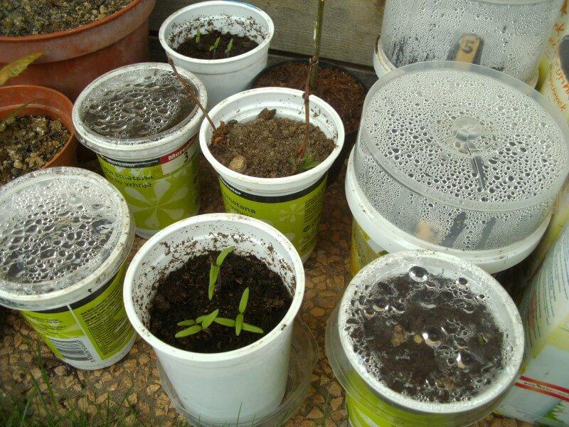 Zimska setev, vznik rastlin
