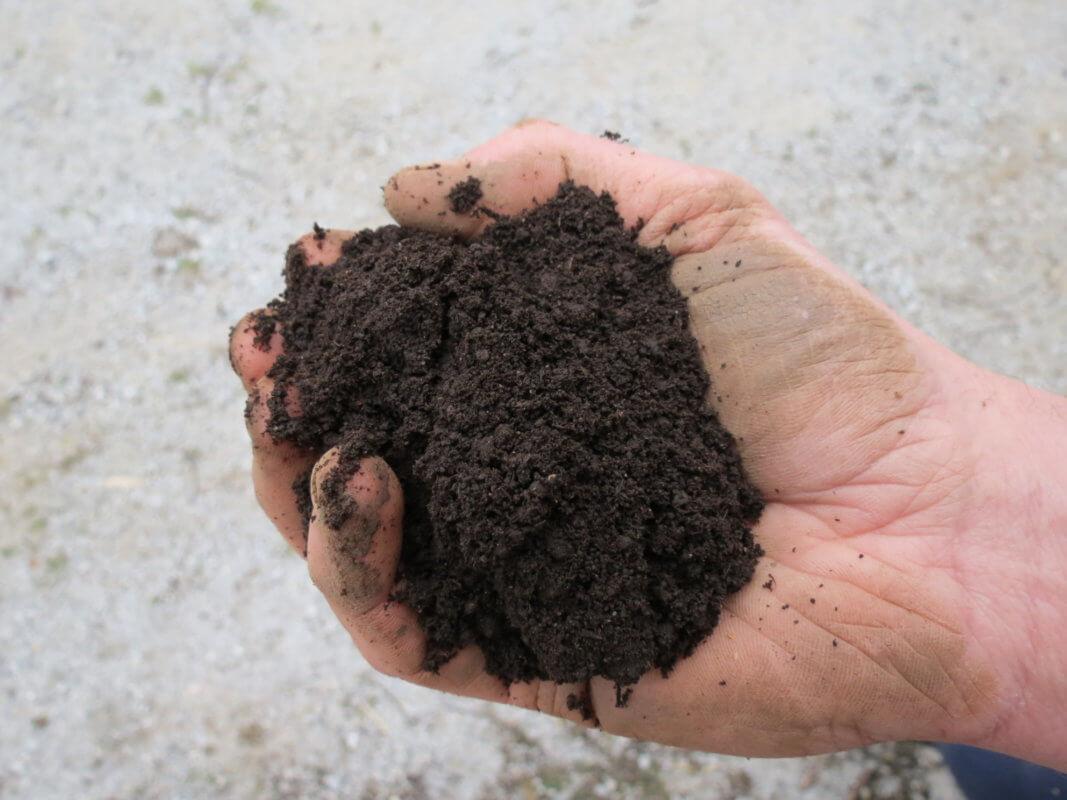 Substrat za vzgojo sadik