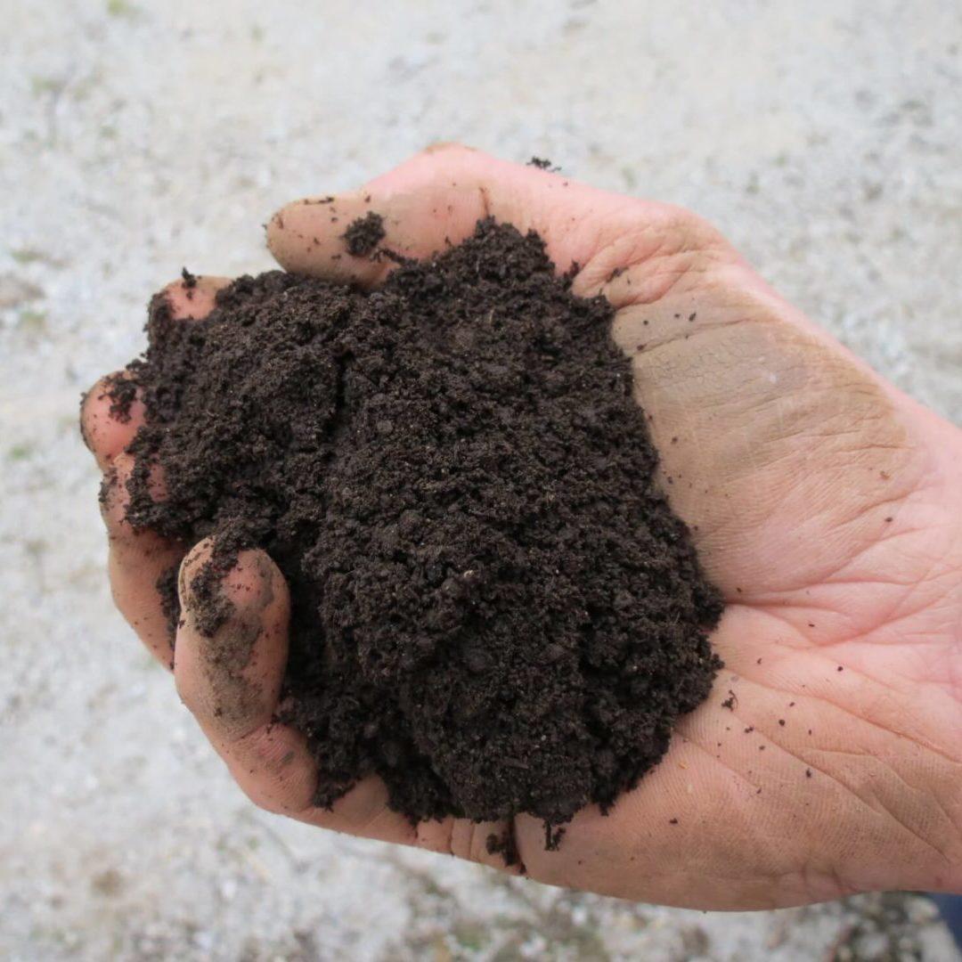Primeren substrat za vzgojo sadik